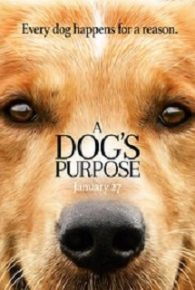 Watch A Dog's Purpose (2017) Full Movie Online - MintMovies
